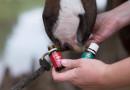 """Si possono usare gli oli essenziali """"internamente"""" per il nostro cavallo?"""