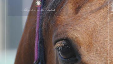 Ill mondo sensoriale del cavallo