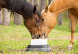 Sale per cavalli